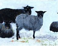 nog meer schapies
